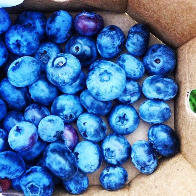 blueberries Quinn Farm