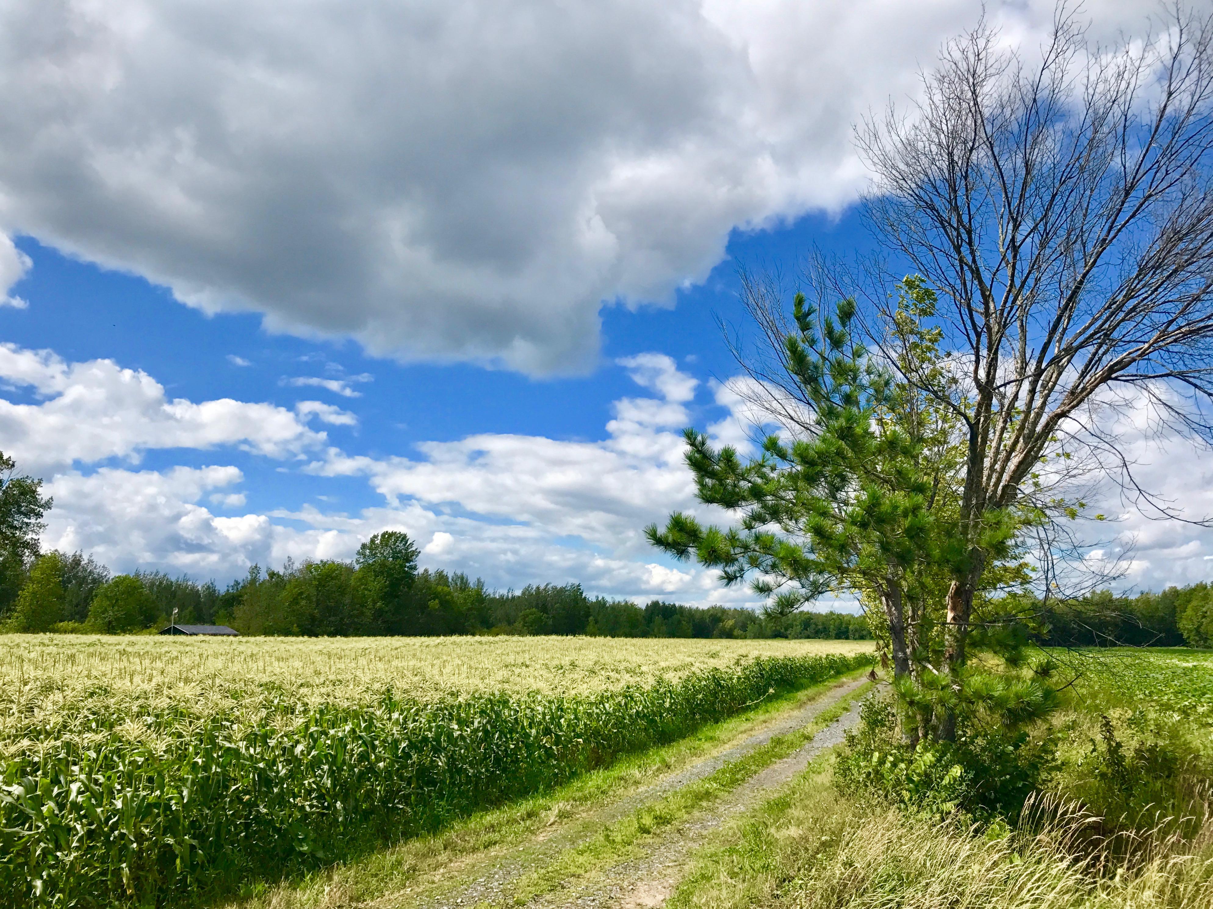 la ferme quinn Quebec perspective photo