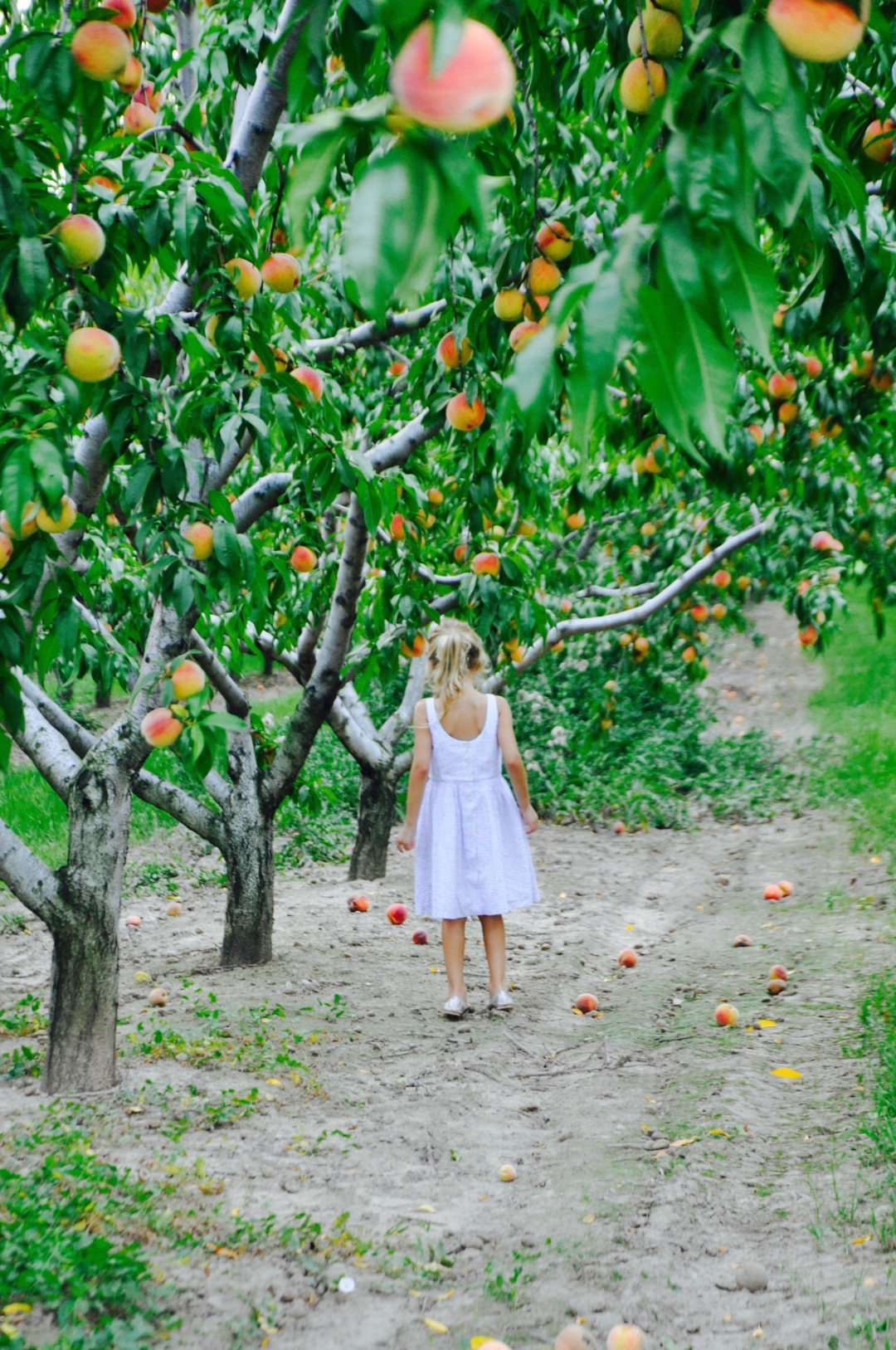 little girl in a peach orchard ralph lauren floral dress