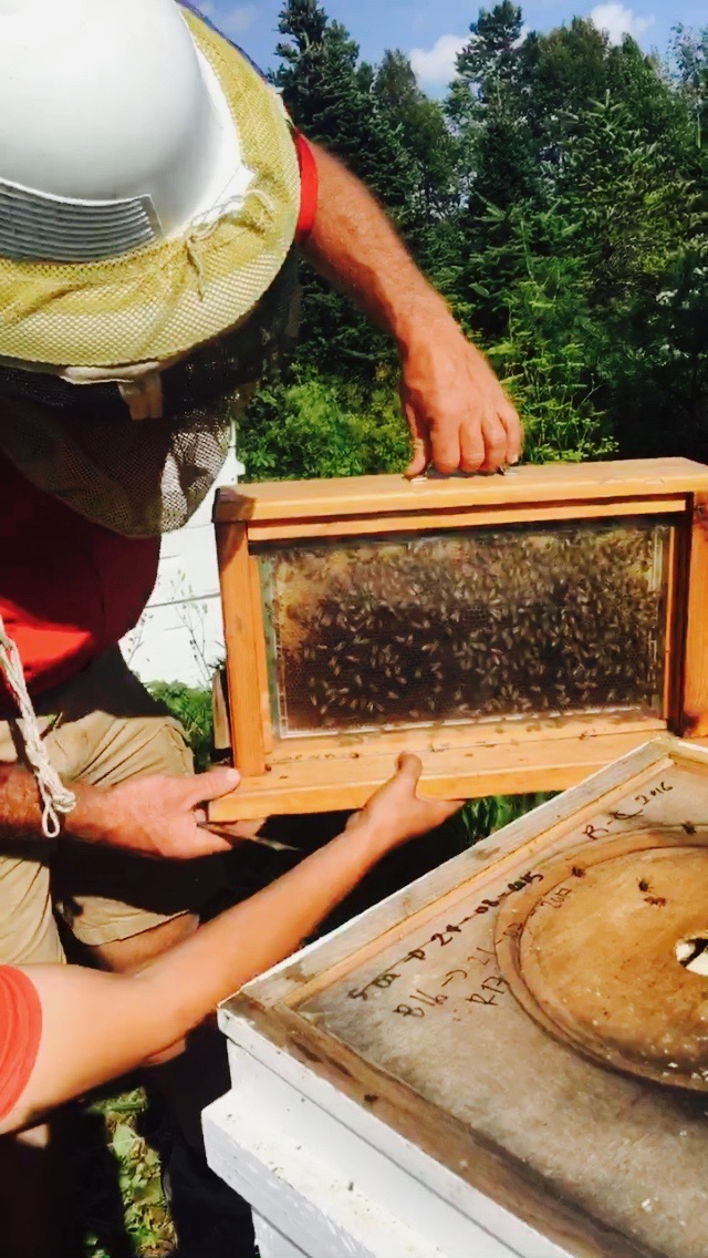 bee frame in hive
