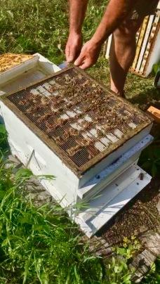 queen exluder bee hive